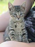 Kitty che si siede abbastanza Immagine Stock