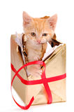 Kitty chewing out of a present. A yellow kitty breaking out of a present Royalty Free Stock Images