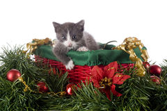 Kitty in a Christmas Basket Royalty Free Stock Images