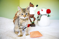 Kitty With Christmas Decoration Stock Photo