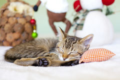 Kitty With Christmas Decoration Stock Image