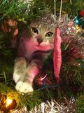Kitty in the Christmas Tree Stock Images