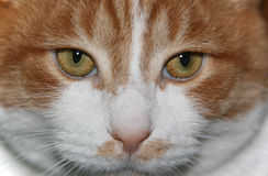 Kitty close up Stock Photos