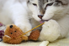 Kitty con el juguete 2 Foto de archivo