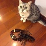 Kitty con la langosta Fotografía de archivo libre de regalías
