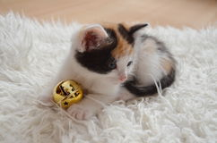 Kitty con una campana del jingel Imagen de archivo