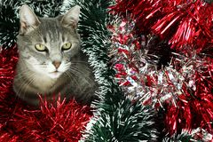 Kitty covered by tinsel Stock Images