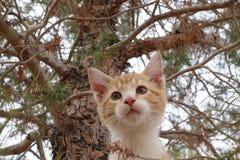 Kitty dans l'arbre Image libre de droits