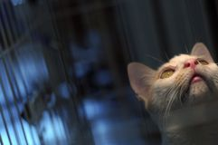 Kitty dans la cage Photo stock