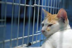Kitty dans la cage Photos libres de droits