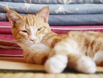 Kitty dans la salle de tatami Image libre de droits