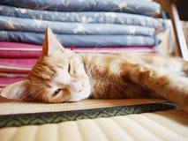 Kitty dans la salle de tatami Photographie stock