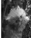 Kitty dans les trois Photos stock