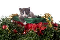 Kitty dans un panier de Noël Images libres de droits