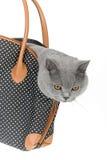 Kitty dans un sac Photos libres de droits