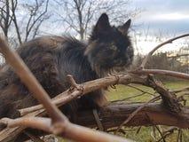 Kitty de repos Image libre de droits