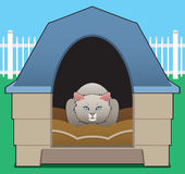 Kitty in the Doghouse Royalty Free Stock Photography