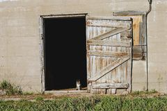 Kitty in a doorway. Kitten in the doorway of a barn Royalty Free Stock Images