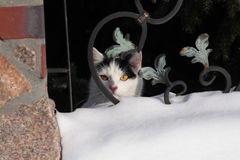 Kitty doux image libre de droits