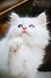 Kitty doux Photo stock