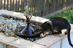 Kitty drinking water Royalty Free Stock Image