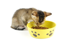 Kitty eating dry food Royalty Free Stock Photos