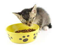 Kitty eating dry food Stock Photos