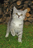 Kitty en el jardín Fotos de archivo