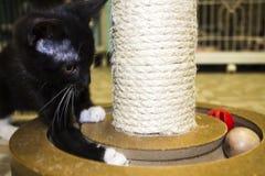 Kitty en el juego Imágenes de archivo libres de regalías