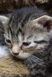 Kitty en la cama después del sueño imagen de archivo libre de regalías