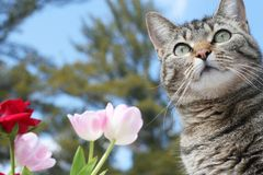 Kitty enjoying her garden Stock Photos