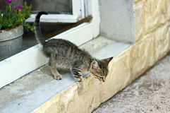Kitty escape out through a window Stock Photography