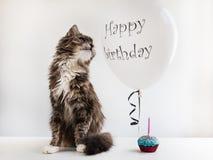Kitty et ballon d'hélium avec des salutations d'anniversaire photographie stock libre de droits