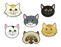 Kitty Faces Royalty Free Stock Photography