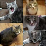 Kitty faces royalty free stock photos