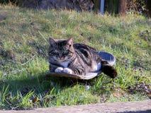 Kitty faisant de la planche à roulettes Photographie stock