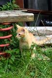 Kitty on a farm Stock Photo