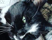 kitty images libres de droits