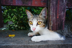 Kitty at fence Stock Photography