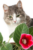 Kitty and flower. Funny kitty and flower on foreground isolated on white Royalty Free Stock Photo