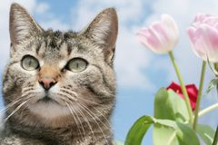 Kitty with flowers Stock Images
