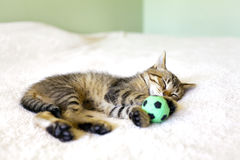 Kitty With Football Ball. Kitty With Football Green Ball Royalty Free Stock Photo