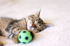 Kitty With Football Ball. Kitty With Green Football Ball Royalty Free Stock Photos