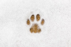 Kitty footprint in the snow Stock Photos