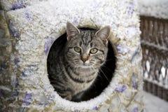 Kitty freddo Fotografie Stock