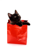 Kitty Gift. Adorable kitten in a red gift bag isolated on white Royalty Free Stock Photos