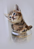 Kitty in a glass Stock Image