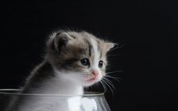 Kitty in glass. Cute kitty stand a big glass bottle with totally black background Royalty Free Stock Image