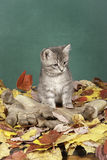 Kitty on gloves and leaves. Stock Photos