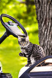Kitty on a Golf art. A grey tiger cat sitting on a golf cart Stock Photography